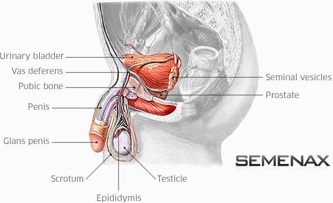 mandlig orgasmeintensitet
